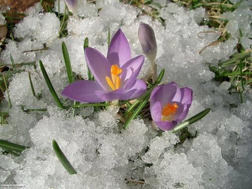 Speciale primavera